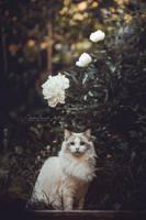 The Crown Princess by IllusoryCalm