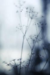autumnal blues II by nakedlady