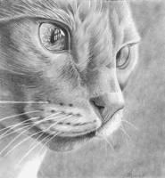 Stare by Laurasshadesofgrey