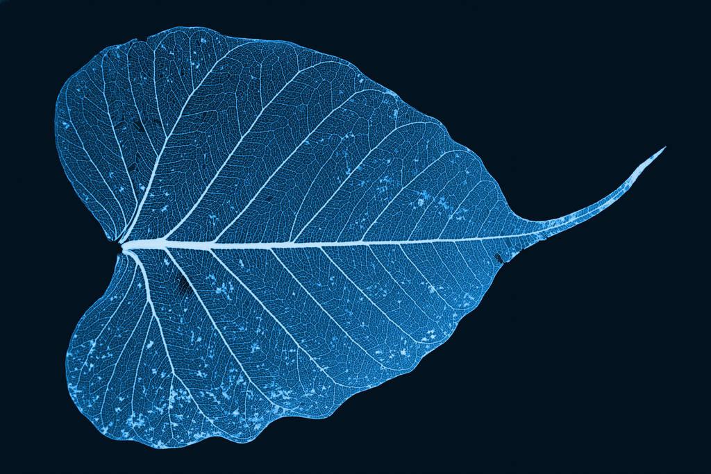 Cyanotype by peanuthorst