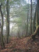 Forest by Kiwiaa-Stock