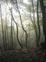 Forest2 by Kiwiaa-Stock