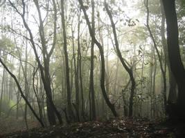 Forest 3 by Kiwiaa-Stock