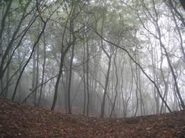 Forest 6 by Kiwiaa-Stock