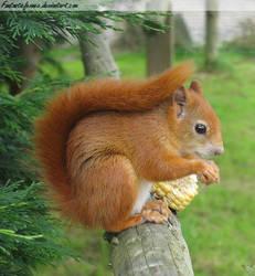 Squirrel Pose by FantasticFennec