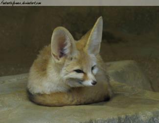 Fennec Fox by FantasticFennec