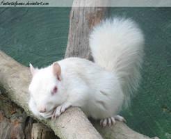 Albino Squirrel by FantasticFennec