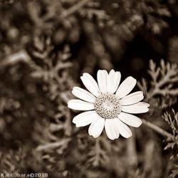 speia Flower by Green-Des