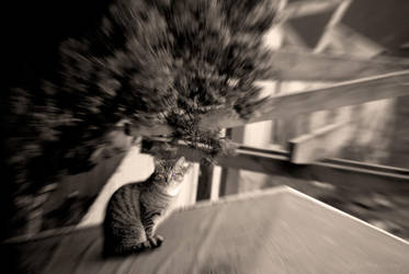 The Blind Cat by Photosnap