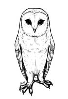 Owl - Sketch by Ourka