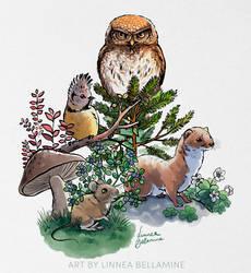 Little Forest Animals by Linzu