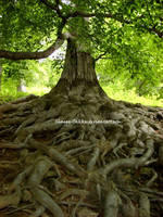 Old Tree by Shaggy-Takku
