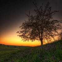 April Sunset by Saber1705