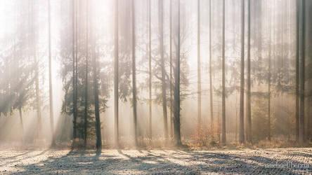 An einem Wintermorgen ... by Saber1705