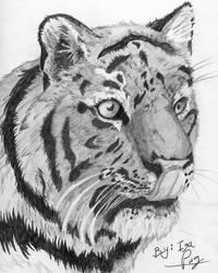 Tiger draw by IzaPug