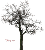 A Cherry Tree png by sirocco-rc