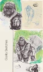 Gorilla Sketches by SaisDescendant
