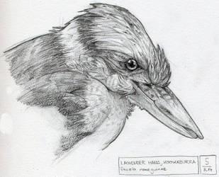 Lauging Kookaburra Sketch by SaisDescendant