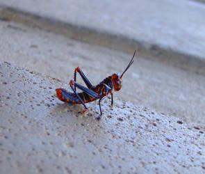 Annicikithus Grasshoper by Annaksunamoon
