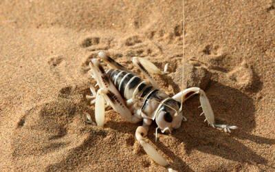 Desert Sand Weta by Annaksunamoon