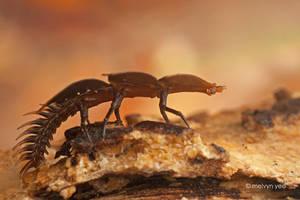Trilobite Larvae 01 - Kubah by melvynyeo