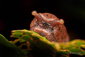 Slug by melvynyeo