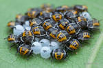 Baby bugs! by melvynyeo