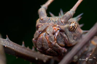 Meet Grumpy Stick by melvynyeo