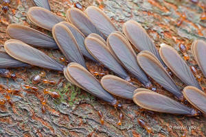 Swarming Termites by melvynyeo