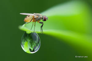 Balancing Act by melvynyeo