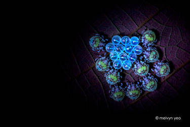 UV Shield Bugs Nymph and egg shells by melvynyeo