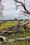 Fallen tree by faestock