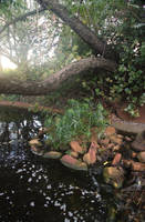 Boas Gardens2 by faestock