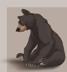 quick Black Bear by Nothofagus-obliqua