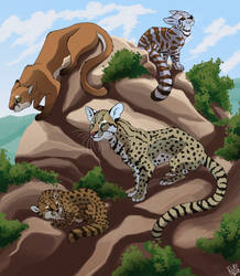 Some cats that might appear in Awka by Nothofagus-obliqua
