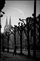 cologne by LowKnee