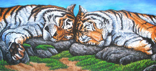 Tigers - oil portrait by Bisanti