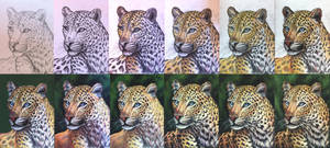 Chinese leopard - walkthrough by Bisanti