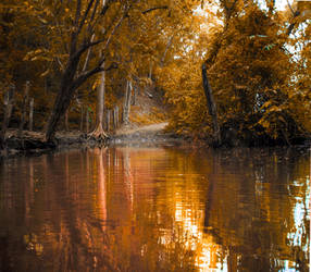Autumn forest background stock by little-spacey