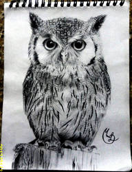 Owl (Buho) by MonikaTDG
