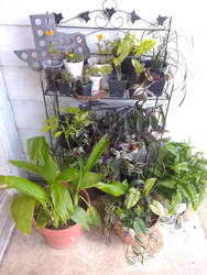 plants 1000 by vangogh2005
