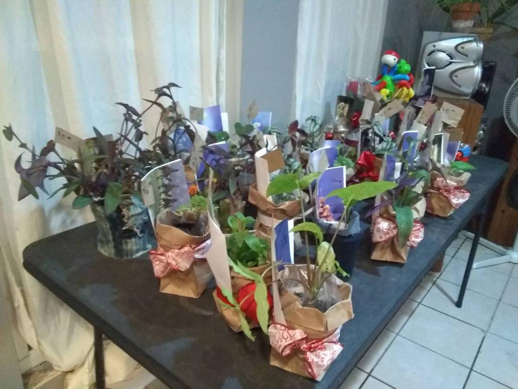 Renee's Plants by vangogh2005
