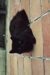 The black cat by Nath1101