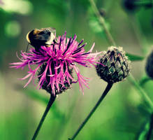 Bumblebee by Plakitina