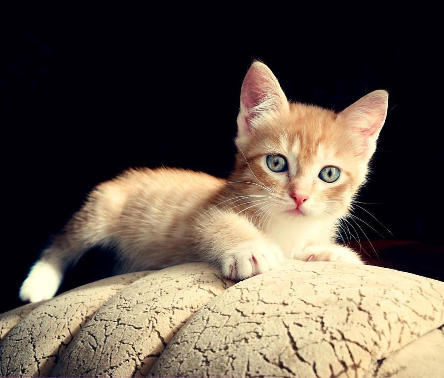 Kitten Asya by Plakitina