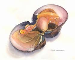 raw clam by Powerfulzen