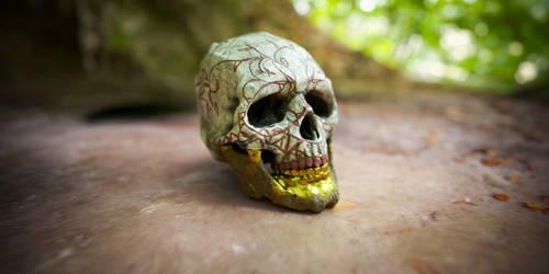 Skull Study by MartinNH