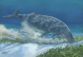 Mammalodon colliveri by Gogosardina