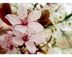 spring. by miyavik
