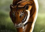 Tiger by ClaireLyxa